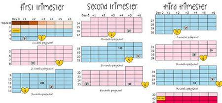 pregnancy weekly calendar