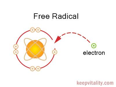 free radicals What do free radicals do how do free radicals form.