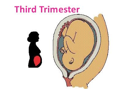 Third trimester