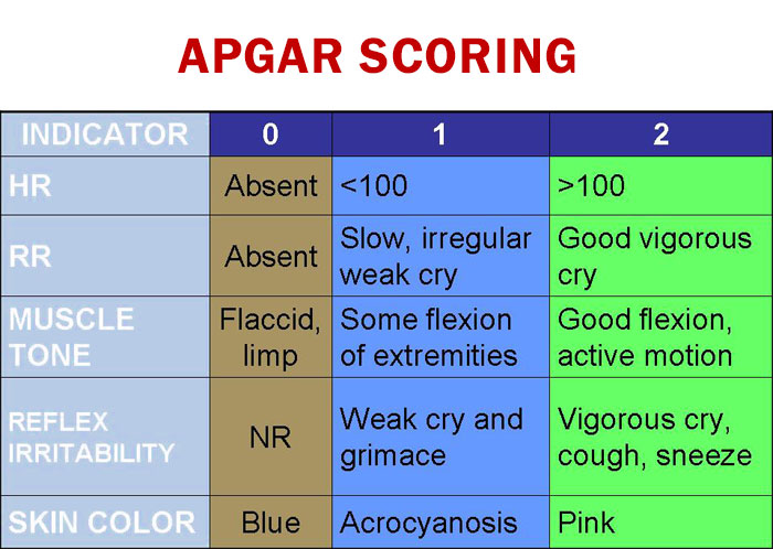 Apgar score calculator