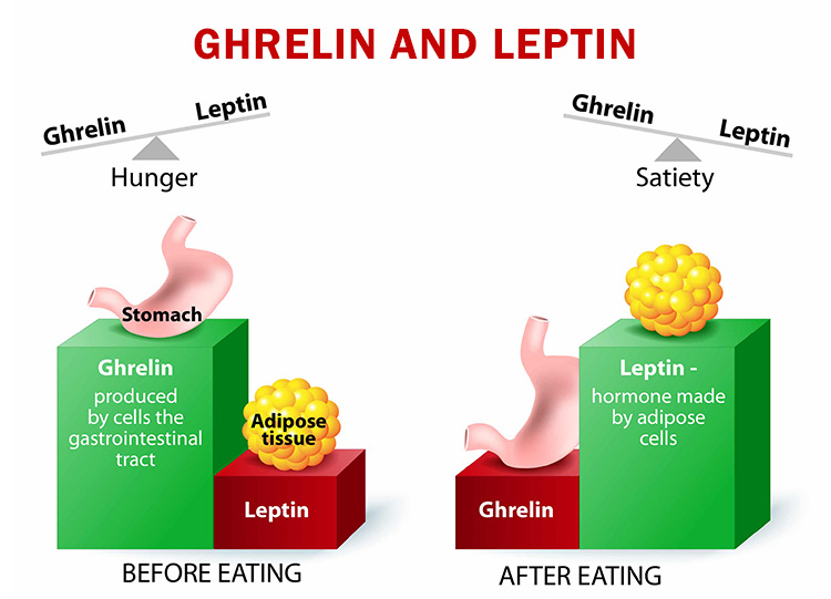 ghrelin and leptin-balance